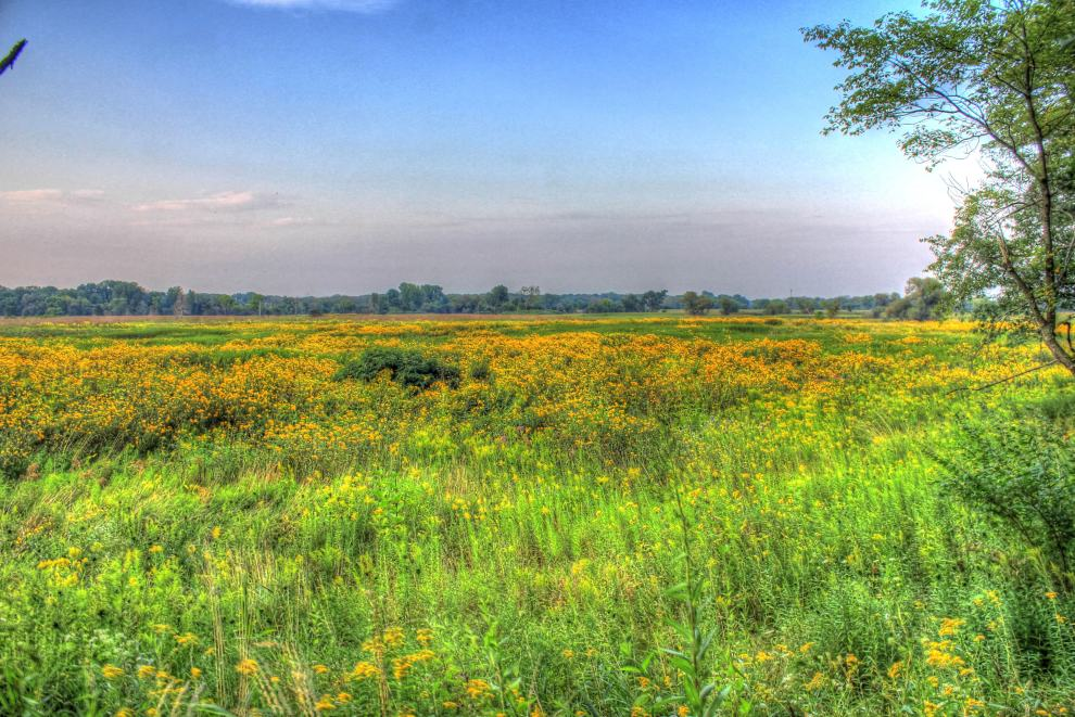 illinois-chain-o-lakes-state-park-another-prairie-landscape
