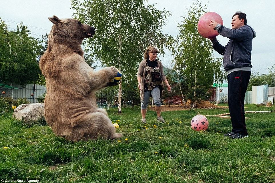 34BD939E00000578-3614880-On_your_head_The_couple_said_the_bear_pictured_playing_football_-a-58_1464513299931